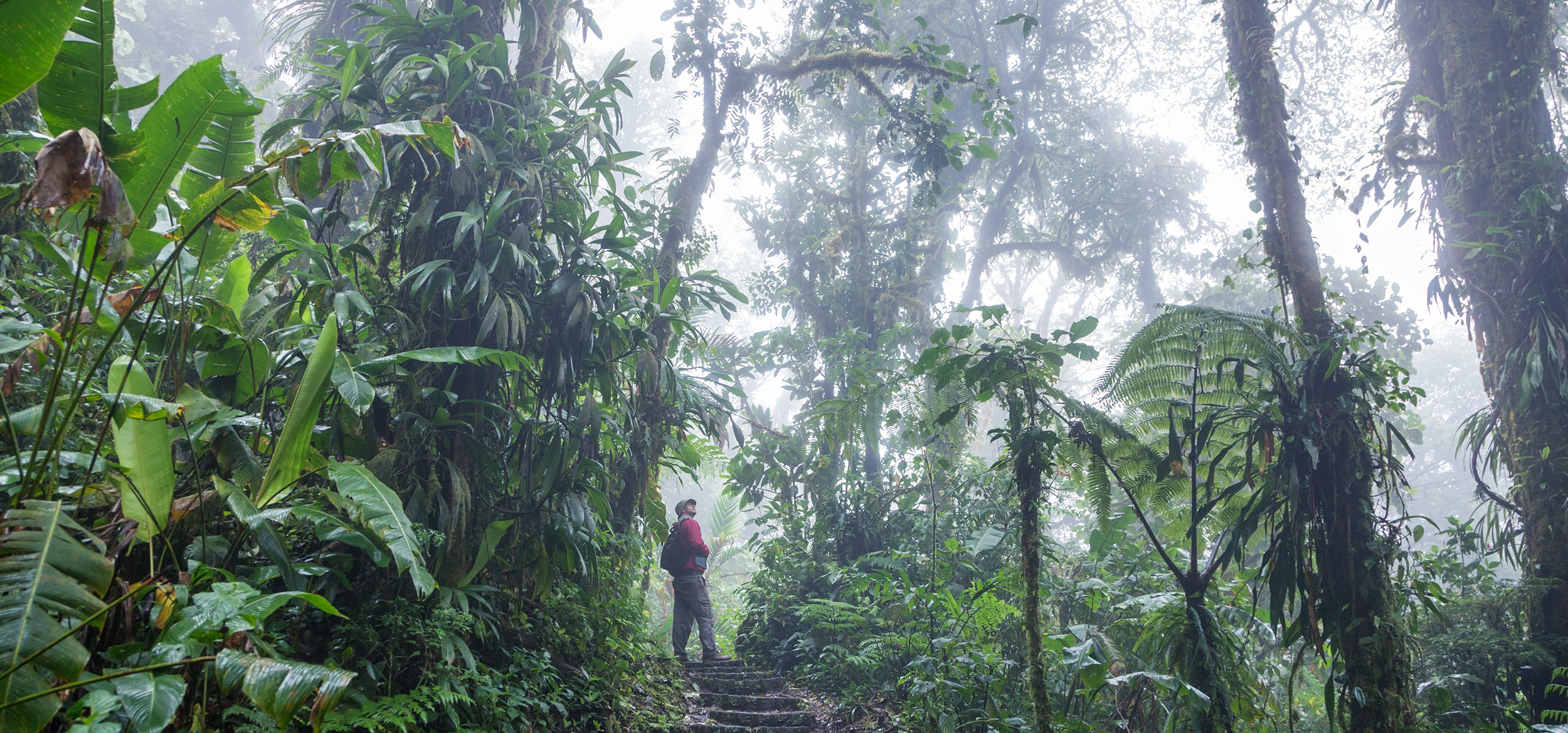 Tourist following a hiking path in the Monteverde Cloud Forest in Costa Rica.
