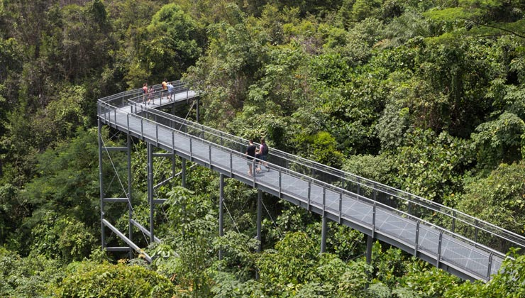 People enjoying a walk on the canopy walkway in the Southern Ridges.