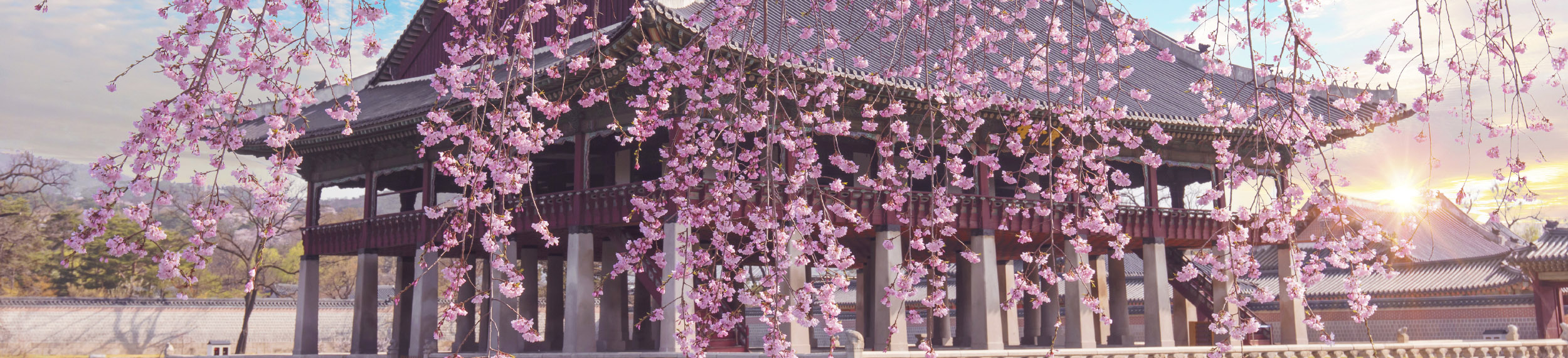 Cherry Blossom in spring at Gyeongbokgung Palace  Seoul, South Korea.